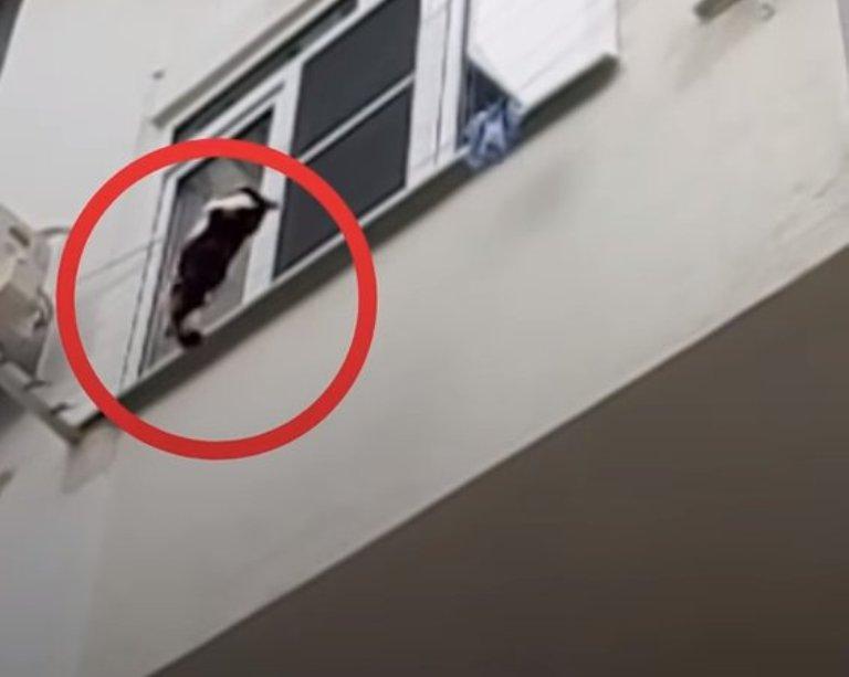 Кошка вцепилась в бельевую веревку и едва удерживалась на высоте