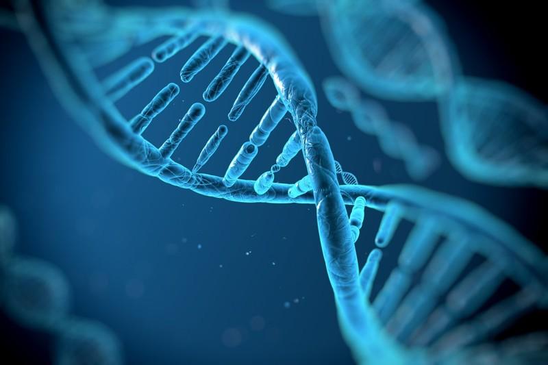 Искусственные рибосомы интересное, медицина, наука