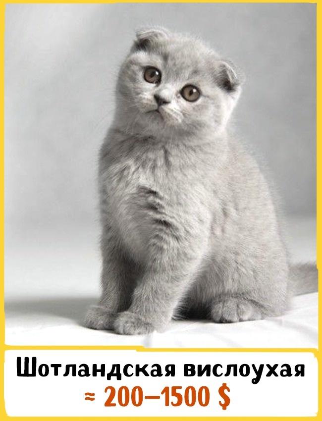 ����, �� ������� �� ���� ��������� ����� ���������
