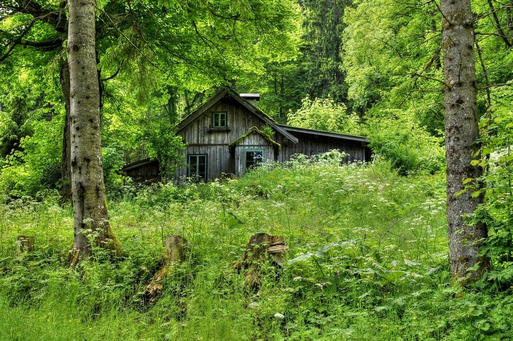 Эх, мечтаю жить у леса