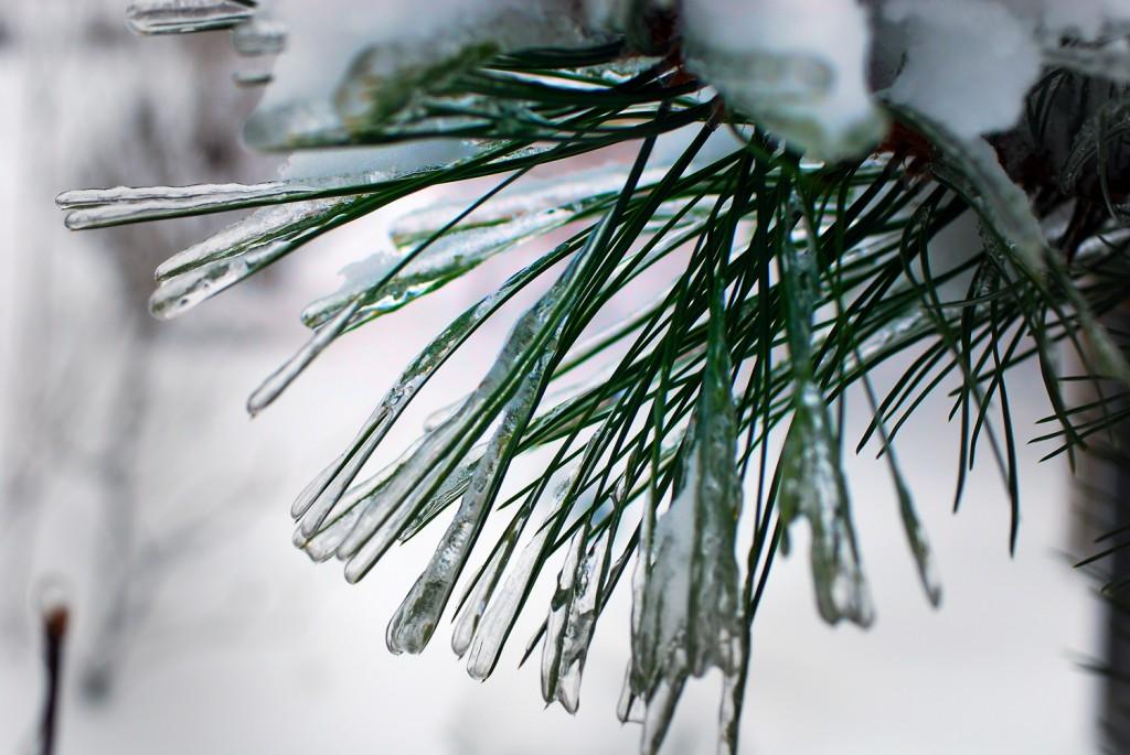 Ледяное украшение