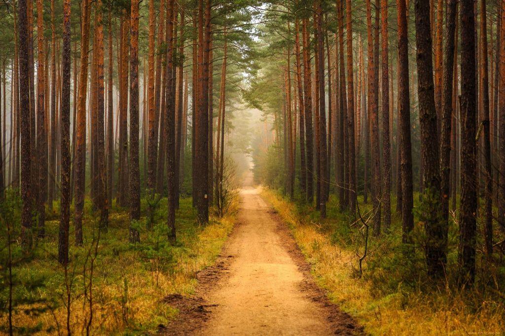 Тайны Царицынского леса