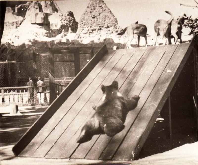 153 года Московскому зоопарку! С Днем Рождения!