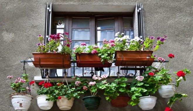 Как получить цветущий балкон, если вы спохватились слишком поздно