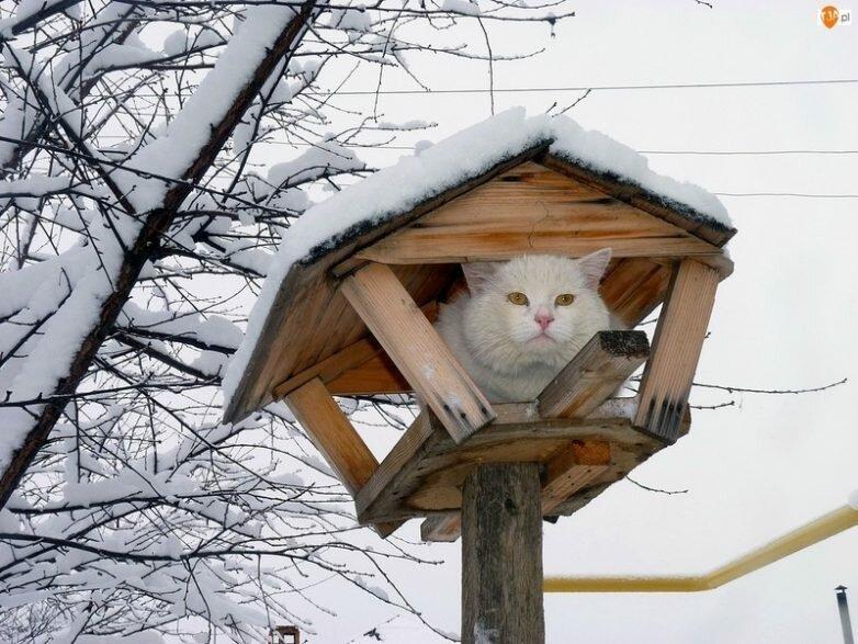 Эти котики плевать хотели на…