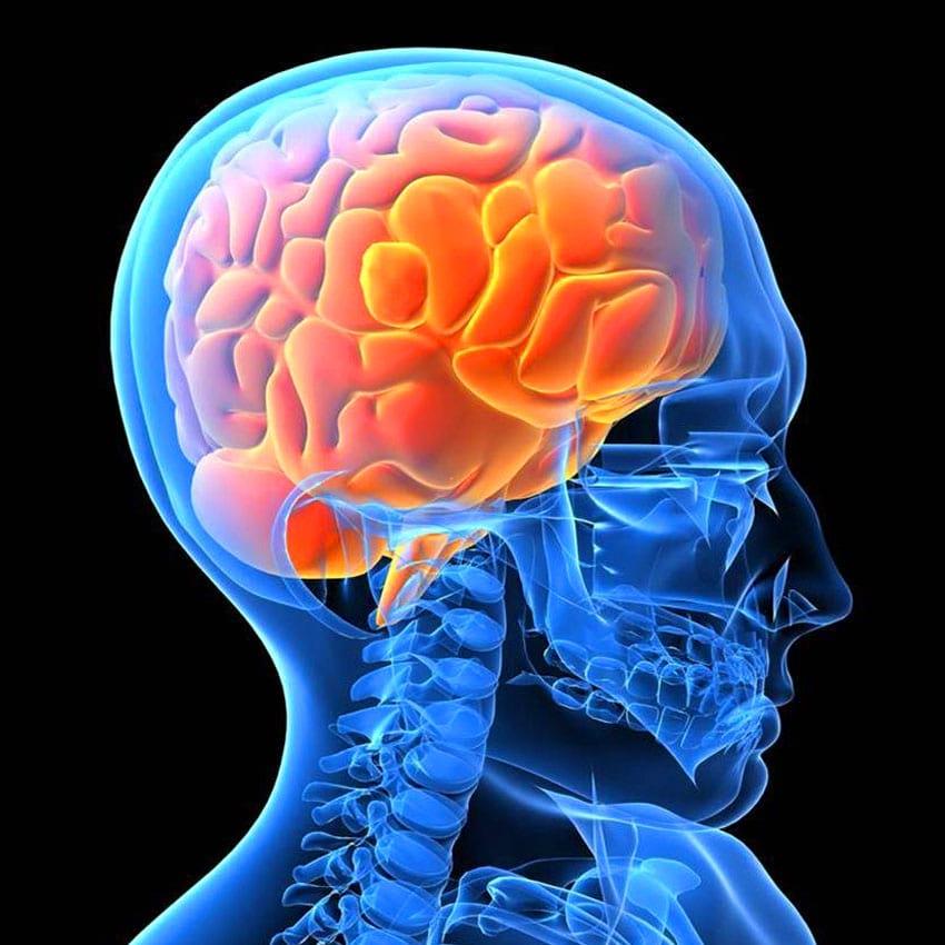 Как улучшить кровообращение в головном мозге с помощью старинного рецепта