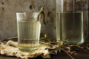 Березовый сок: как собирать, хранить и что готовить