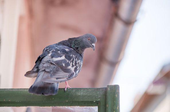 Орнитологи рассказали, что делать с залетевшими домой птицами