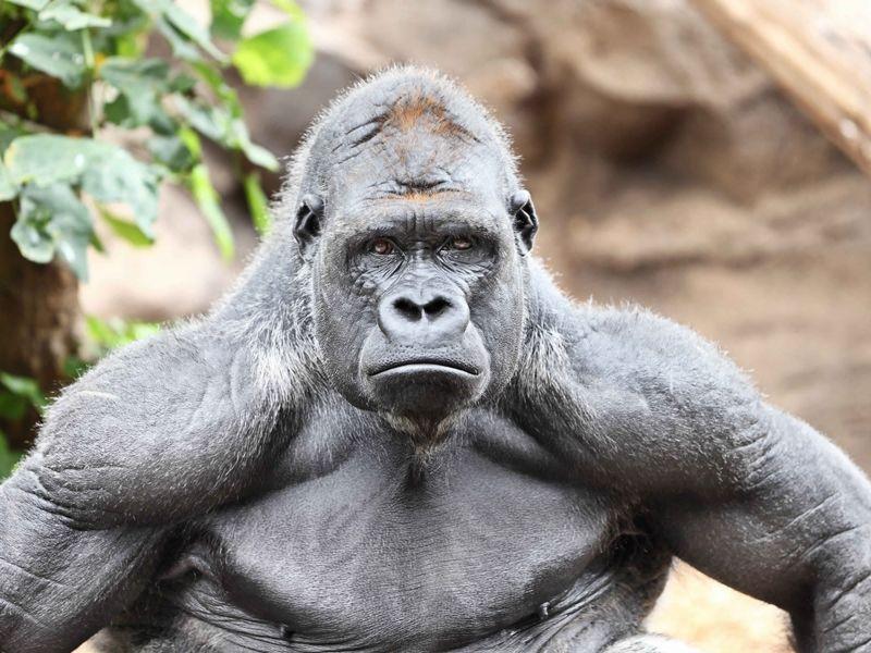 Бессердечная эволюция животные, здоровые, образ_жизни, организм, сила, спорт, тренировка, человек