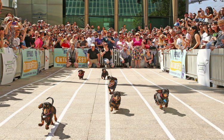 В Мельбурне прошли ежегодные «гонки четвероногих сосисок»