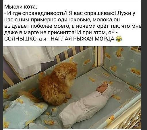 КОШКО - МАТРИЦА с ЯНДЕКСА