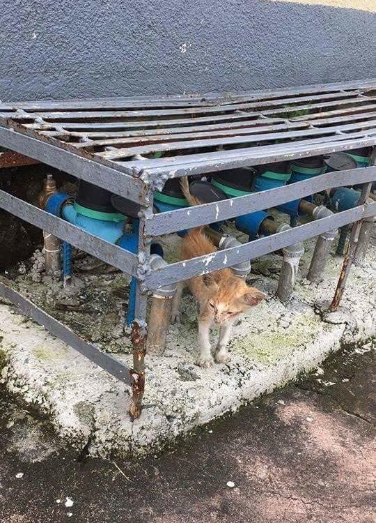 Оголодавший бездомный котёно…