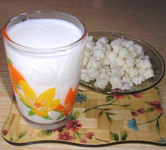 Полезные свойства тибетского молочного гриба