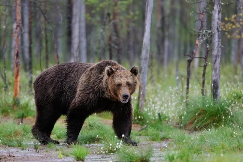 Когда имеешь дело с медведем, спесь самоубийственна