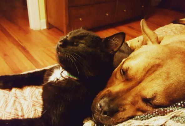 Собака и кошка, спасенные с разницей в один день, теперь неразлучны
