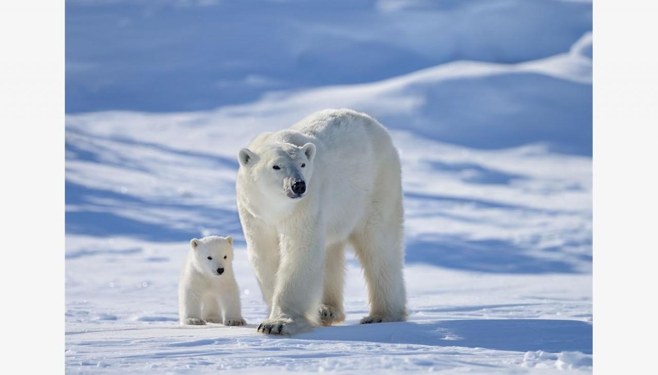 Жизнь за полярным кругом. (Рассказ)