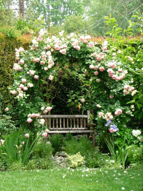 скамья у роз