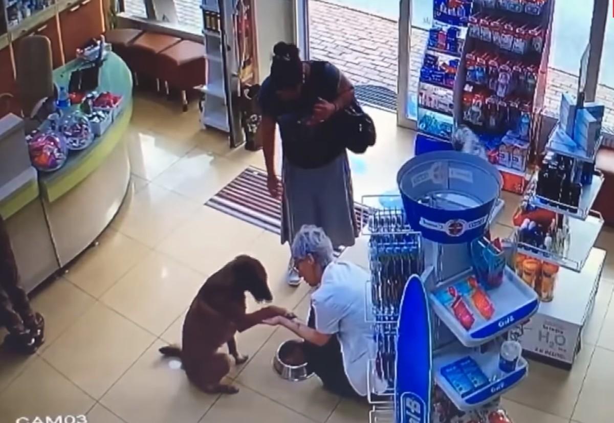 Камеры засняли, как умный пес зашел в аптеку и попросил о медпомощи
