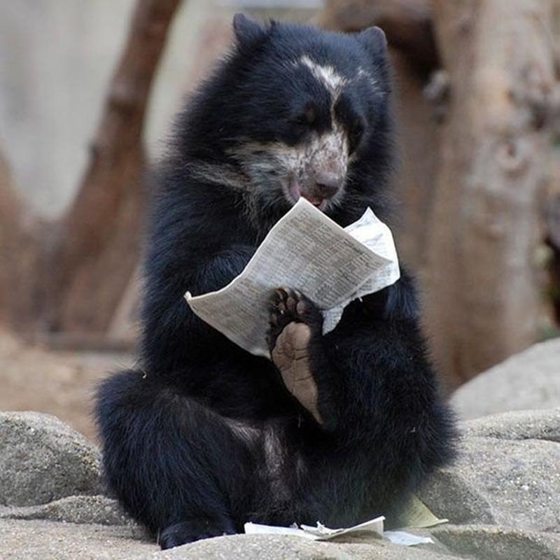 10 смешных медведей, занятых повседневными делами