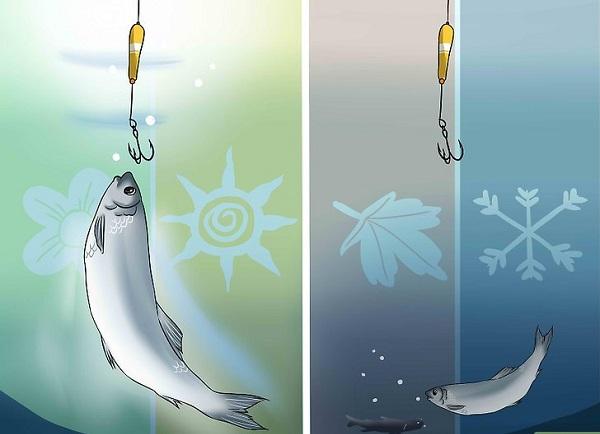 Правильное время для рыбной ловли