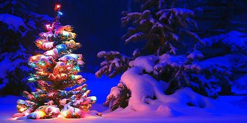 Новогодняя ёлка как главный сакральный символ