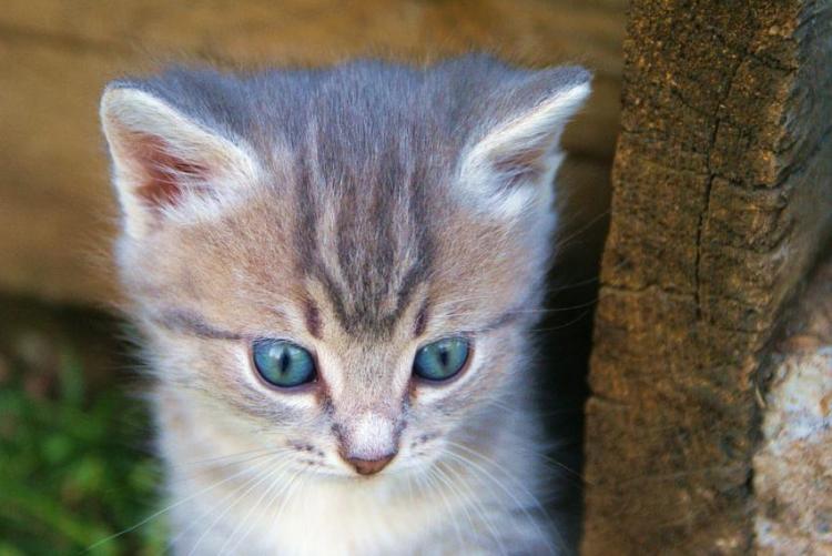 Отвечающий хозяйке котенок с…