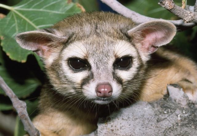 12 животных, о которых многие никогда не слышали