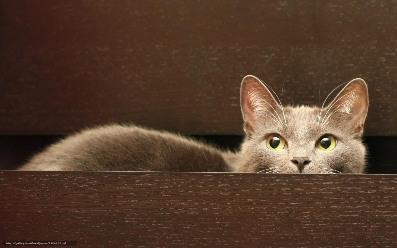 Кот решил разобраться в комоде. Вот что из этого вышло.