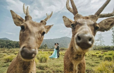 Смешные пары на свадебных фотографиях, снятых в нужный момент