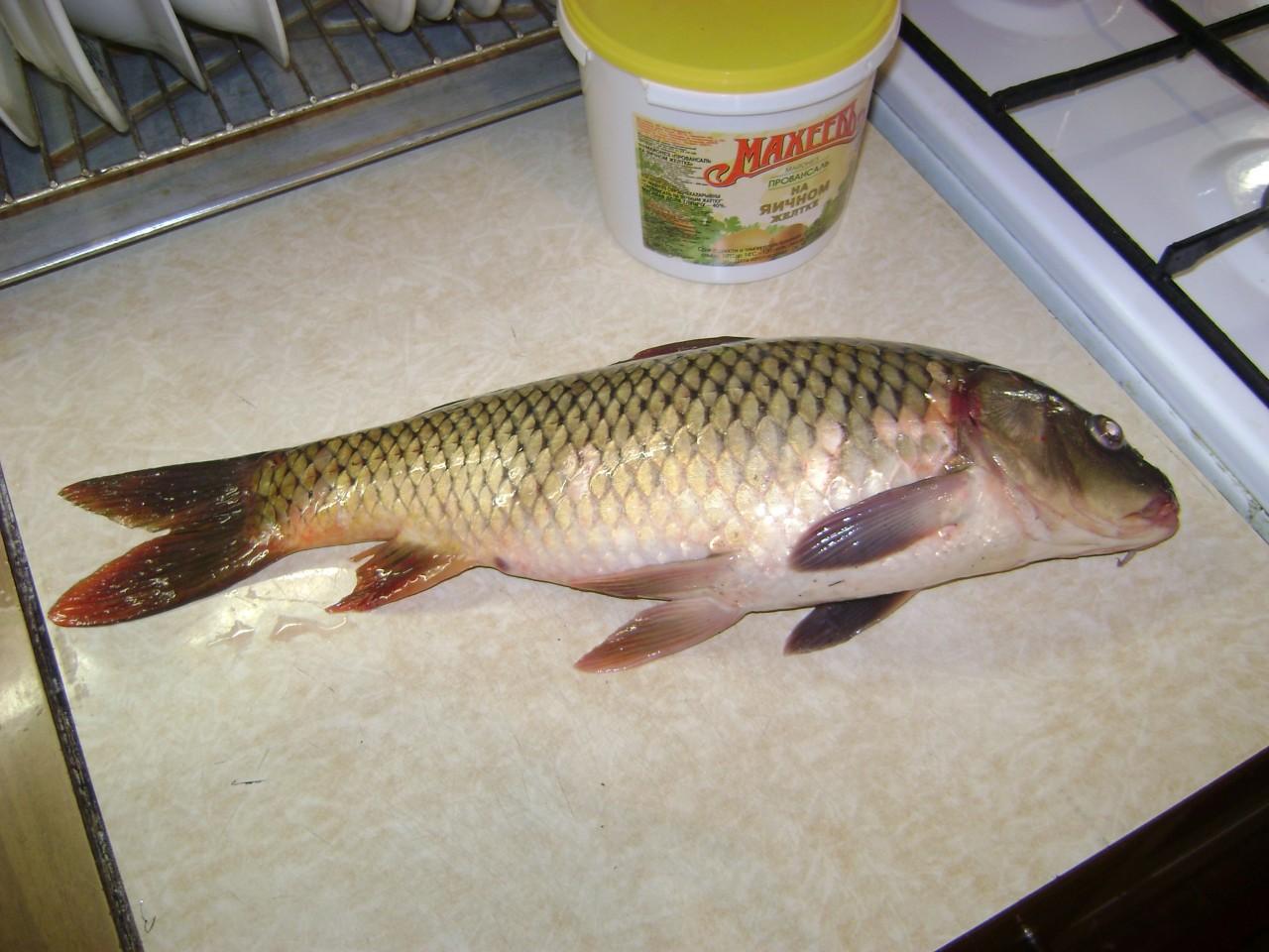 рыбацкая кухня сазан