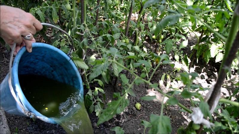 удобрение из травы и дрожжей