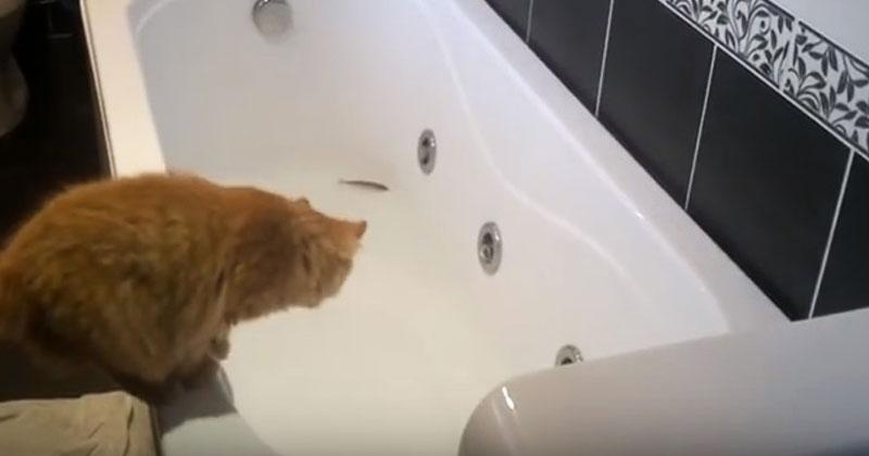 Кот увидел в ванной две рыбёшки. Он долго думал, прыгать ли в воду, и в итоге стал звездой Сети