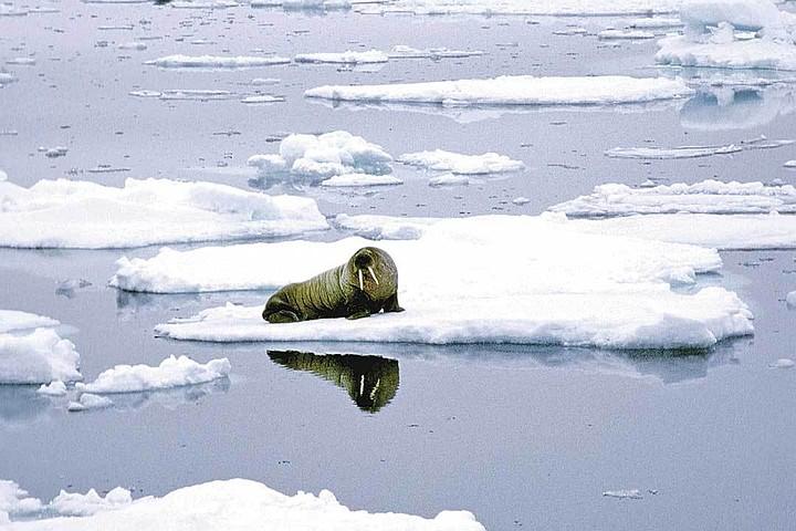 Глобальный обман глобального потепления