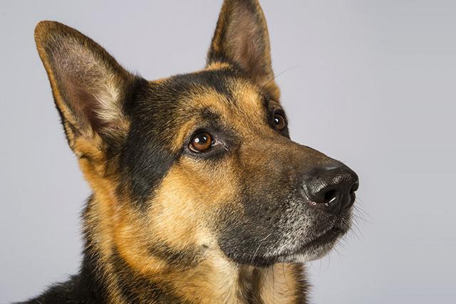Удивительная история об очень умной собаке