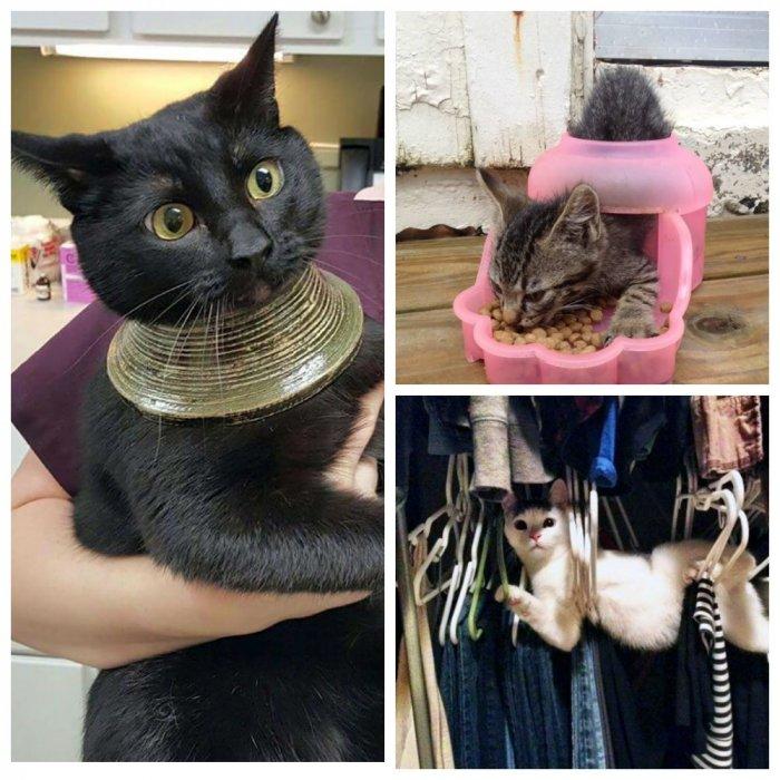 """""""Мой кот - идиот, но я его о…"""