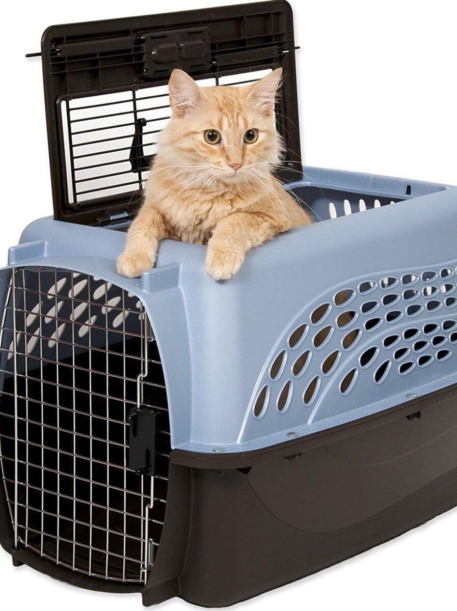 Кошка в специальном контейнере для перевозки. Фото с фотостока.