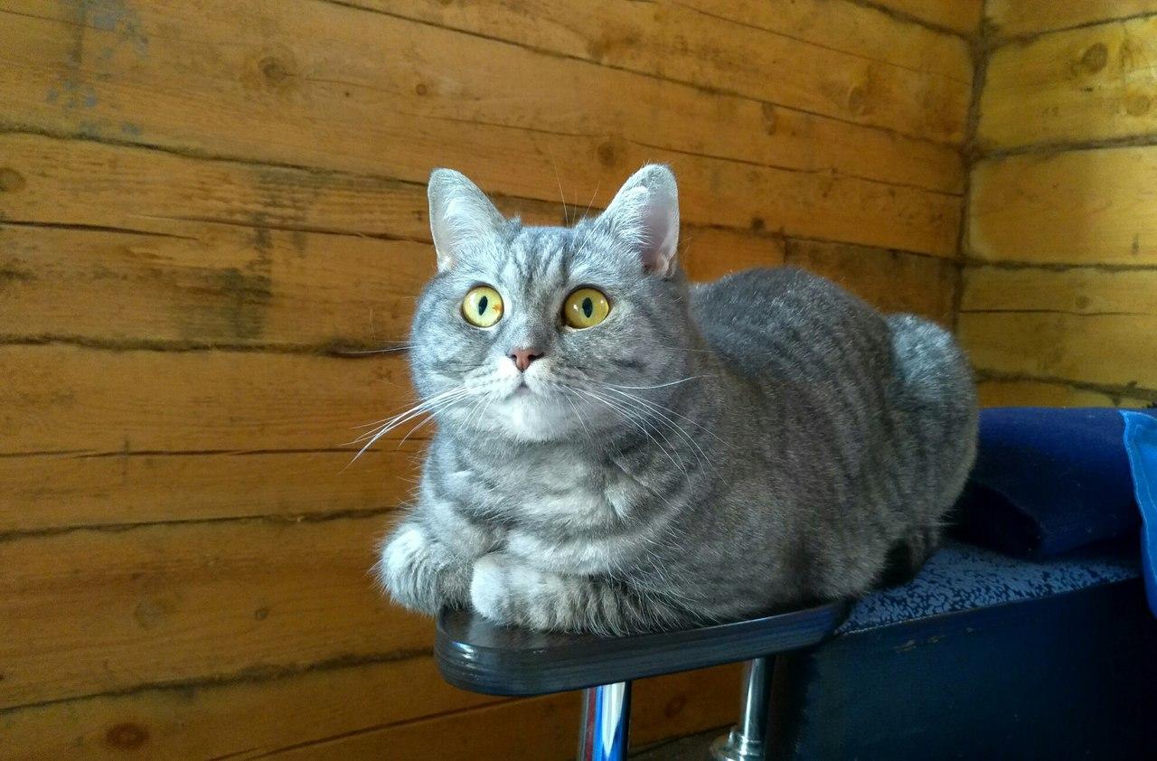 Бездомная кошка играла с мот…