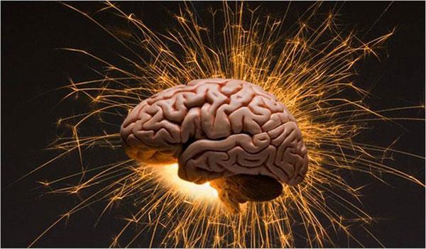 Количество извилин в мозгу никак не связано с наличием ума