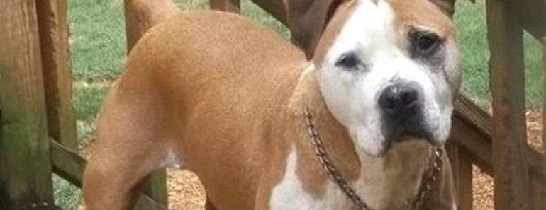 Уличный пес героически спас женщину от мужчины с ножом
