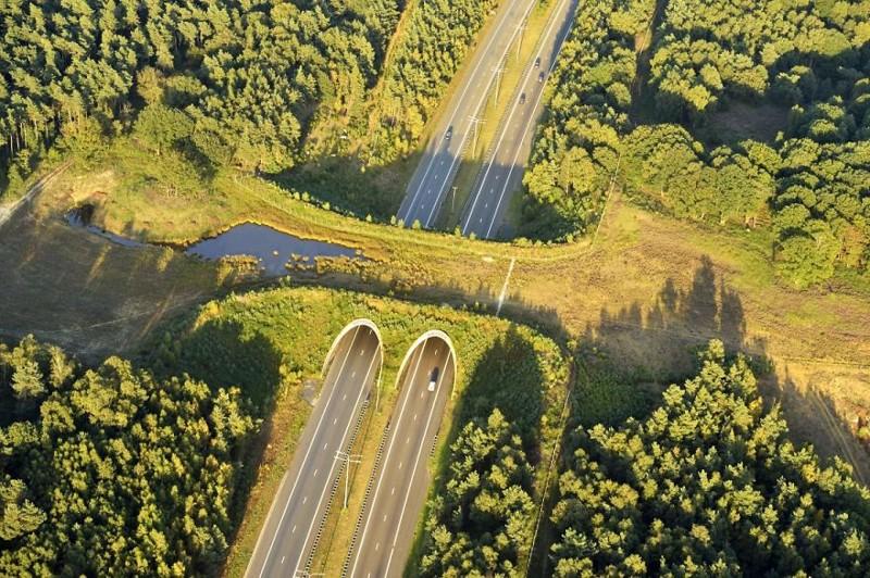 Удивительные мосты, которые спасают тысячи животных каждый год