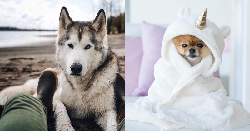 Вот сука: 10 инстаграмов собак, которые популярнее тебя