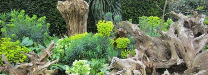 Рутарий – создайте свой сад корней