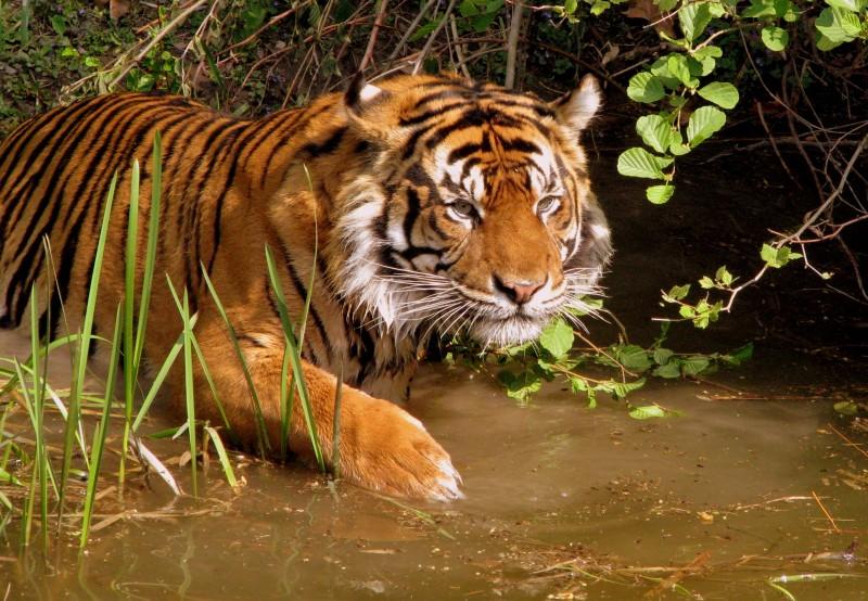 Мужчина стал героем Индии, вырастив собственный лес на высохшей земле