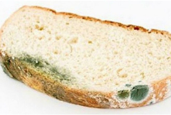 Хлеб с плесенью: чем опасна маленькая плесень для здоровья
