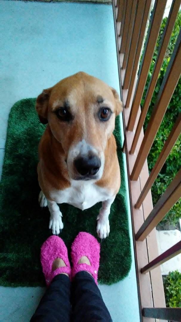 Дочь Элины забрала домой огромного агрессивного кобеля, который прожил в приюте почти 3 года, но никто не хотел связываться с «проблемной» собакой. выбор сердцем, ребенок, собака