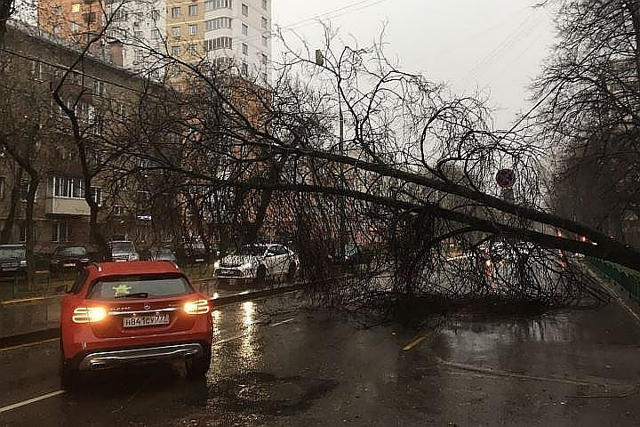 СК России подтвердил гибель девочки во время урагана в Москве