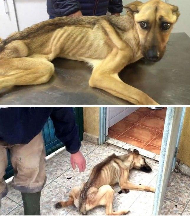 Вот как выглядят собаки после того, как наконец обрели любящих хозяев