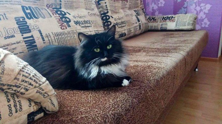 «Кота любят не за что-то, а за то, что он есть у нас»