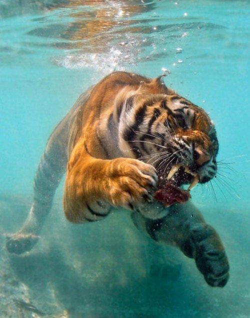 Случайно-удачные снимки с животными (19 фото)