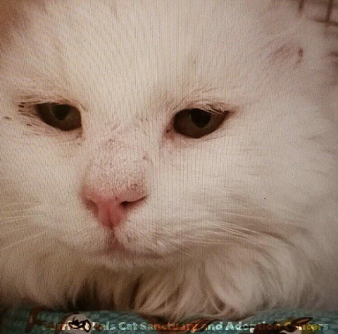 Котик расстался со своими ушами, зато приобрёл семью и единомышленников